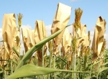 Nigerian government donates seeds to 7,000 farmers