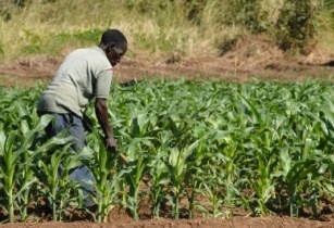 Mpongwe District produces US$18,000 worth of crops