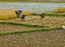 Zambia hosts 4th Commercial Farm Africa 2015