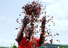 Ghana Cocoa Board secures US$1.3bn syndicated loan