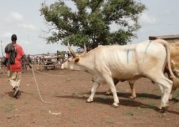 UNMISS hosts conference to end cattle raids
