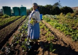 South Africa prepares for International Federation of Agricultural Journalists' world congress