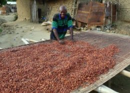 Ghana cocoa farmers to access direct agrochemicals from COCOBOD