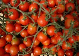 'Ghana's youth should take advantage of tomatoes farming'