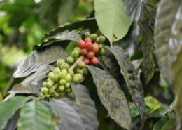 Chinese ambassador pledges to attract more Rwandan coffee and tea investors