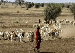 NGO makes rapid strides in improving livestock health in South Sudan