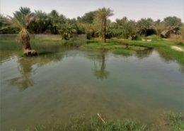 Fish farming project in Northern Niger boosts local economy