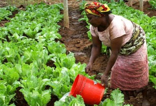 eLearning Africa launches Agriculture Track