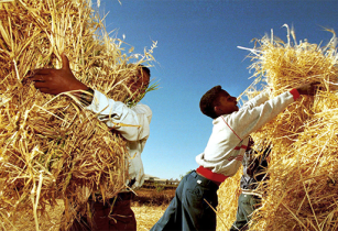 AfDB approves agricultural strategies to boost economy in Eritrea