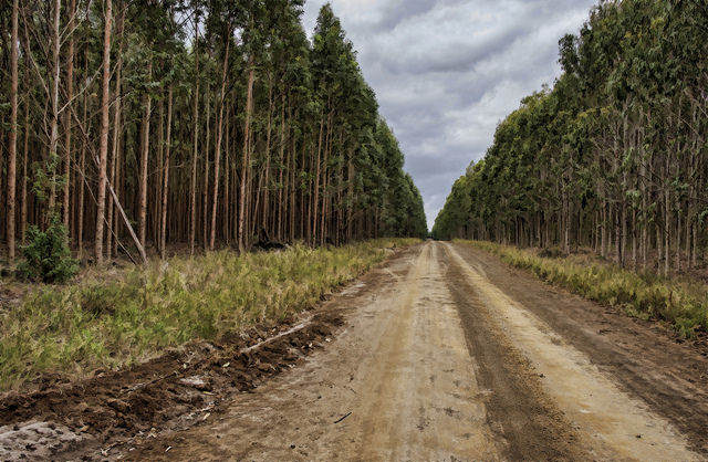 Portucel revises investment to US$3bn in Mozambique forestry project