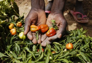 IFAD invests in Niger for food and nutrition security and climate change resilience