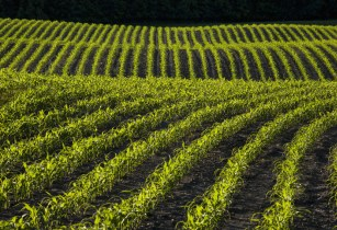On-farm trials show that SOURCE by Sound Agriculture can increase yield