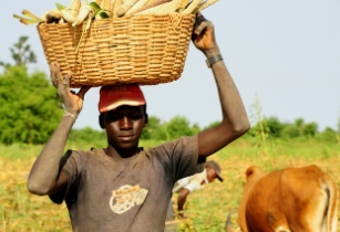 AfDB approves US$42mn grant to develop Sudan's agribusiness