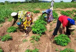 Nigeria refocuses on farming as oil money shrinks