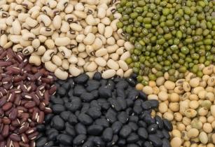 Tanzania�s bean exports feed 10 countries
