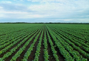 Syngenta and USAID invest US$1.8mn to help smallholder farmers in Zambia