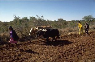 Burkina, Faso, small, scale, farmers, subsidised, ploughs, Bassiako Dao