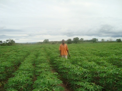 Nigeria has transformed cassava from a subsistence crop to a highly lucrative cash crop