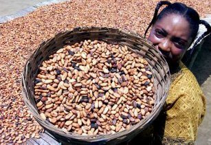 Cocoa_beans_Cameroon