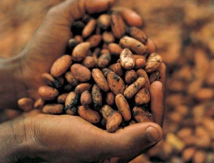 The government of Côte d'Ivoire has announced the establishment of a 'state-controlled cocoa body'