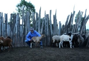 Michael Tobiko Turere with animals 1