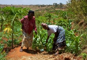 Women smallholder farmers in Kenya