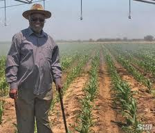 nnews namibia irrigation